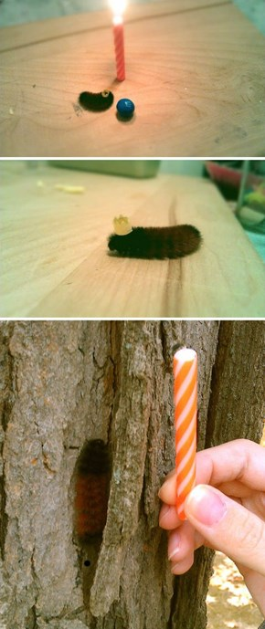 Caterpillar Birthday Party of the Day