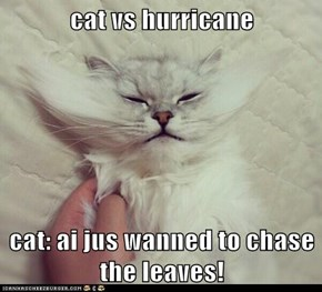 cat vs hurricane  cat: ai jus wanned to chase the leaves!