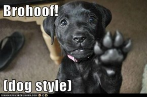 Brohoof!  (dog style)