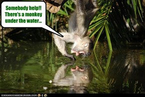 Somebody help!! There's a monkey under the water...