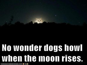 No wonder dogs howl when the moon rises.