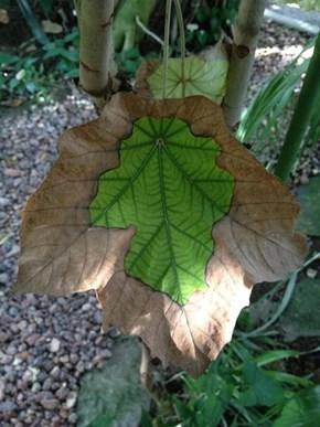 Leaf WIN