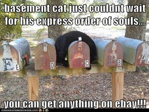 basement cat just couldnt wait for his express order of souls...  you can get anything on ebay!!!