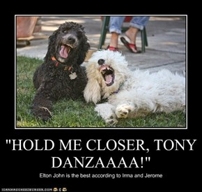 """HOLD ME CLOSER, TONY DANZAAAA!"""