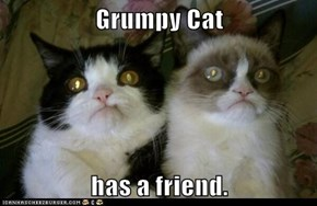 Grumpy Cat  has a friend.