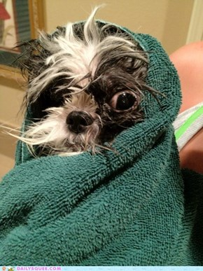 Reader Squee: PBSD (Post-Bath Stress Disorder)
