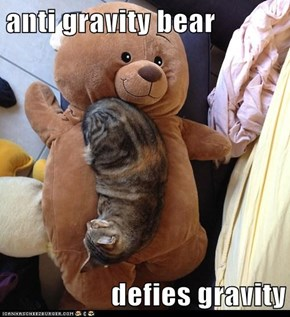 anti gravity bear  defies gravity