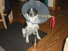 Martini Of Shame of the Day