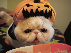 Around the Interwebs: A Gallery of Pumpkin Cats!