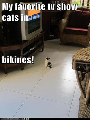 My favorite tv show cats in bikines!