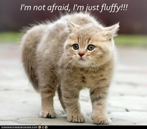 I'm not afraid, I'm just fluffy!!!