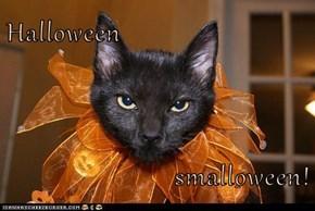 Halloween  smalloween!