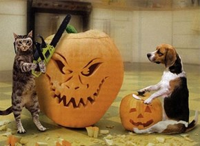 Goggies R Owr Meowloween Friends: Let Me Teach You a Thing or Two About Pumpkin Carving!
