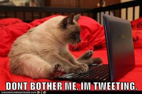 DONT BOTHER ME. IM TWEETING.