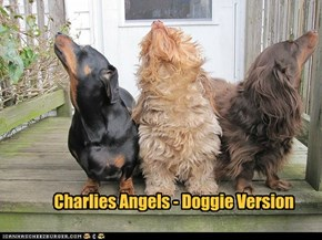 Charlies Angels - Doggie Version