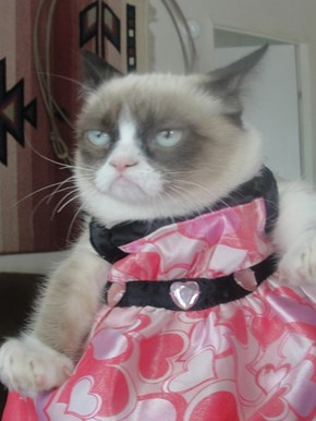 Happy Halloween from Grumpy Cat