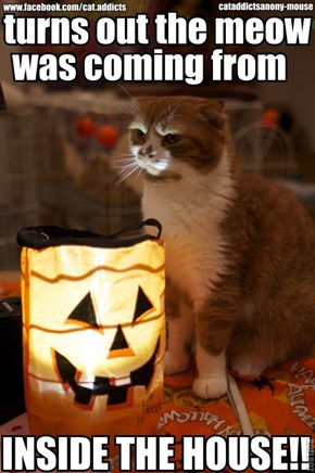 Kitteh Tells a Scary Halloween Story
