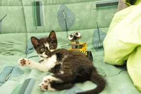 Cyoot Kitteh of teh Day: Don't Turn Around ('Cuz You're Gonna See Wall-E Peekin')