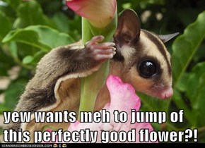 yew wants meh to jump of this perfectly good flower?!