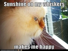 Sunshine on my whiskers  makes me happy