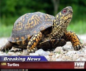 Breaking News - Turtles
