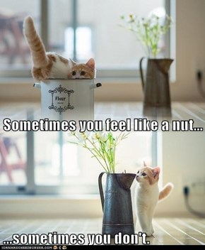 Sometimes you feel like a nut... ...sometimes you don't.
