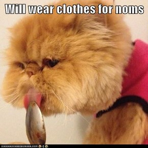 Will wear clothes for noms