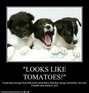 """""""LOOKS LIKE TOMATOES!"""""""