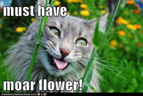 must have  moar flower!