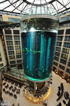 Company Lobby Aquarium WIN!