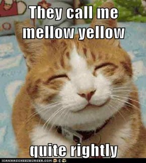 They call me mellow yellow  quite rightly