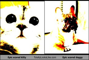 Epic scared kitty Totally Looks Like Epic scared doggy