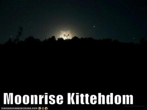 Moonrise Kittehdom