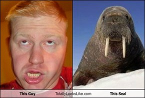 This Guy Totally Looks Like This Seal