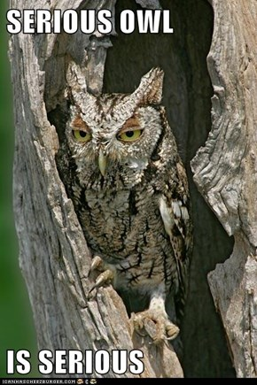 SERIOUS OWL  IS SERIOUS