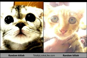 Random kitteh Totally Looks Like Random kitteh