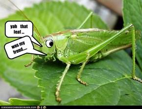 leaf frend