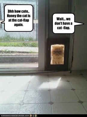 Ohh how cute.. Honey the cat is at the cat-flap again.