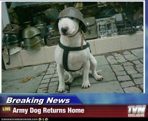 Breaking News - Army Dog Returns Home