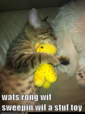 wats rong wif sweepin wif a stuf toy