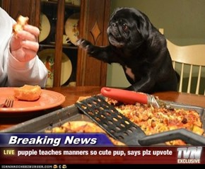 Breaking News - puppie teaches manners so cute pup, says plz upvote