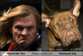 Flowing Hair Thor Totally Looks Like Flowing Ear Dog