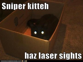 Sniper kitteh  haz laser sights