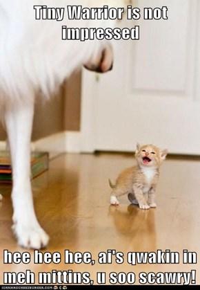 Tiny Warrior is not impressed  hee hee hee, ai's qwakin in meh mittins, u soo scawry!