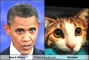 Barack Obama Totally Looks Like dis kitteh
