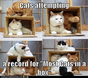 "Cats attempting  a record for ""Most Cats in a box"""