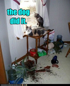 the dog did it.