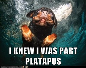 I KNEW I WAS PART PLATAPUS