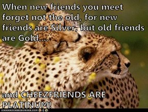When new friends you meet forget not the old, for new friends are Silver, but old friends are Gold....  and CHEEZFRIENDS ARE PLATINUM!