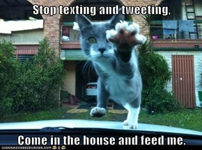 Stop texting and tweeting,  Come in the house and feed me.